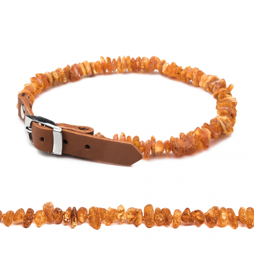amber collar for dog