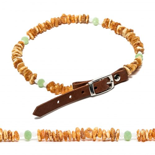 decorated amber collar for dogs